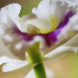 fleur,orchidée,moncel