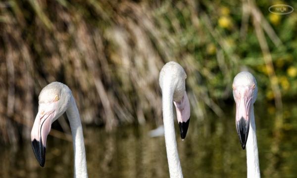 Parc Ornithologique du Pont de Gau en septembre