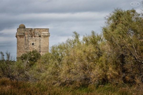 Du coté de Aigues Mortes, la tour Carboniere