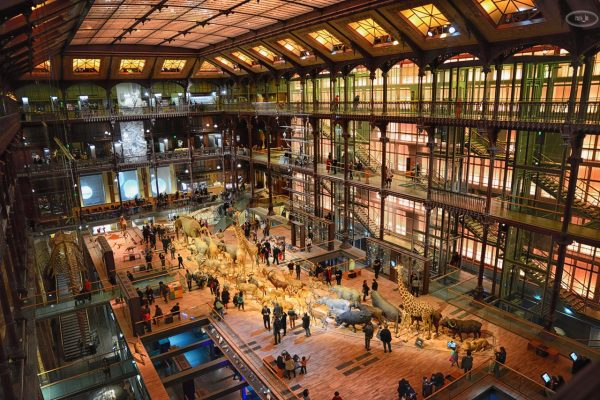 Grande Galerie de l'évolution   Paris