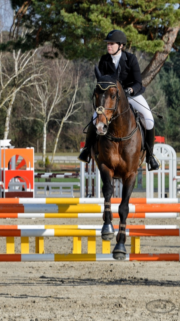 concours,cheval,hippique,fontainebleau