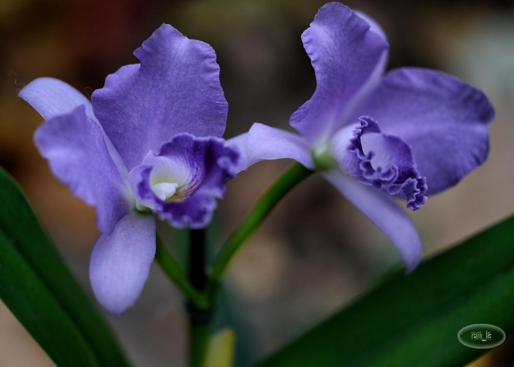 orchidées,vincennes,parc,floral