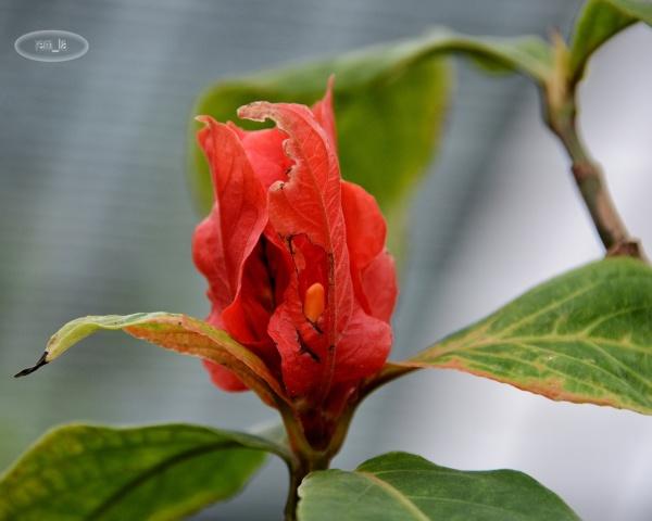 auteuil,serre,plante fleur