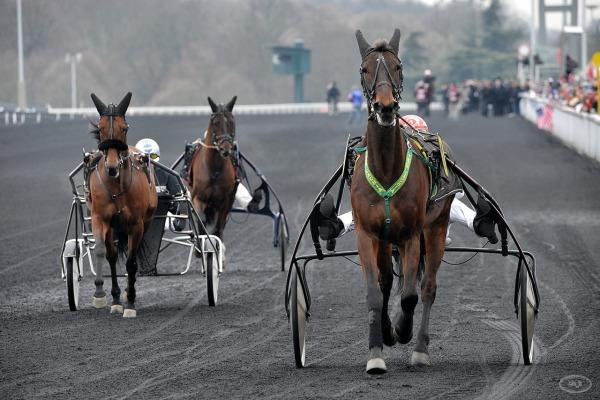 cheval,course,amerique,vincennes,opodo