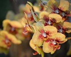 orchidées,paris,serre,plante