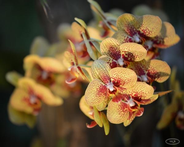 Orchidée aux serres du jardin des plantes