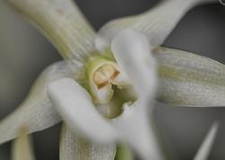 orchidées,paris,serre,plante,fleur