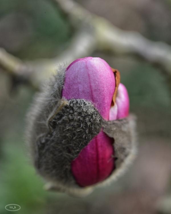 printemps,vincennes,floral,parc,fleur