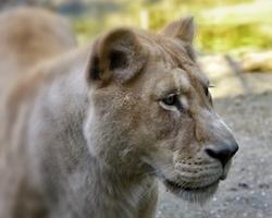 zoo,animal