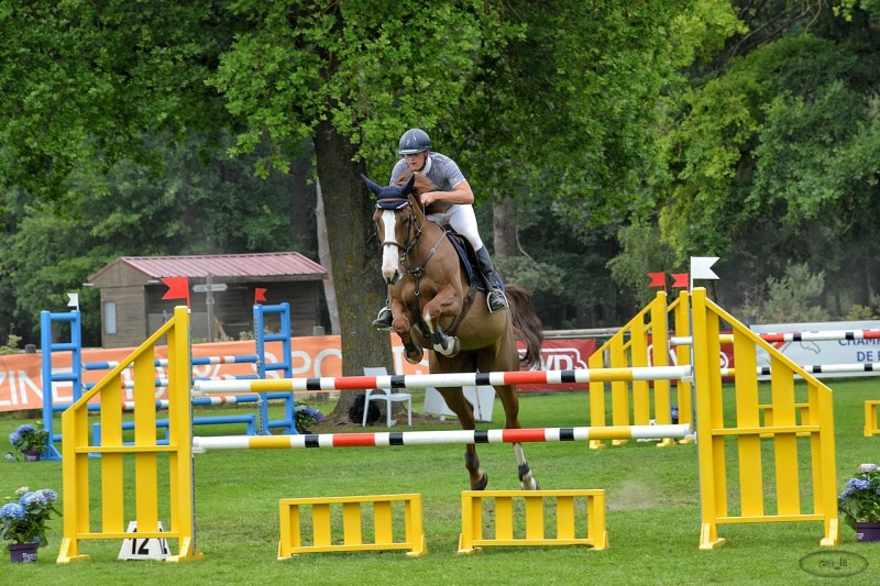 fontainebleau,jumping,cheval