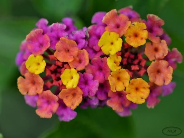 fleur,vincennes,parc,floral