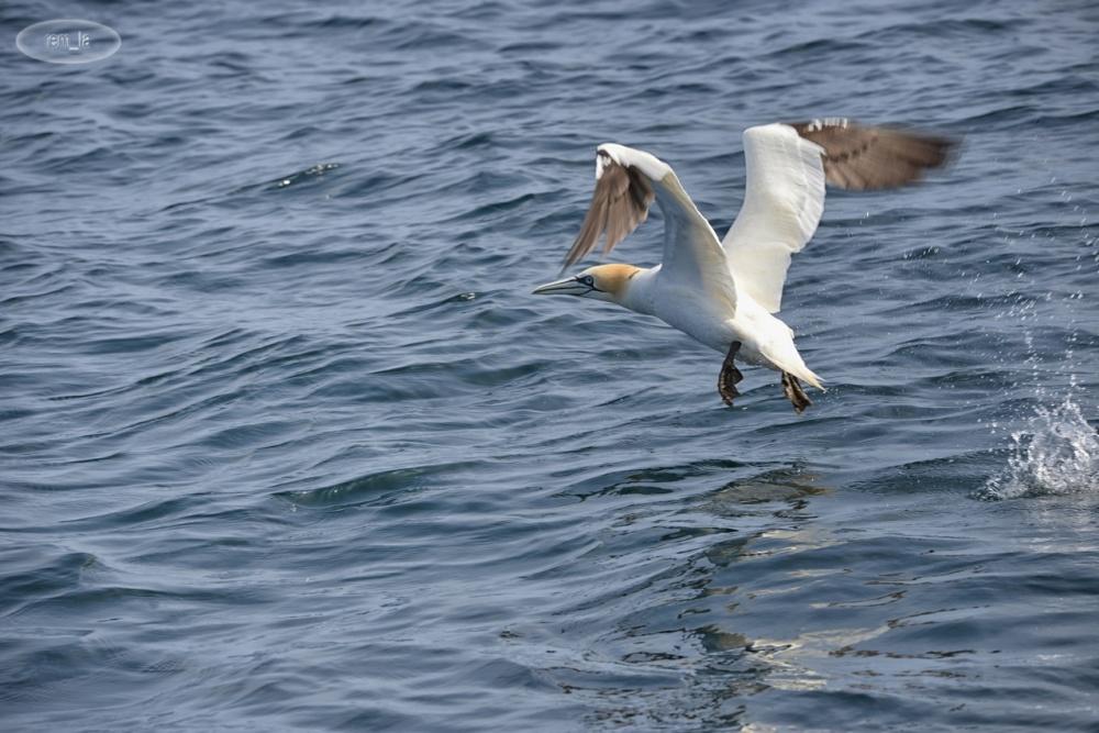 archipel,oiseau,mer,bretagne