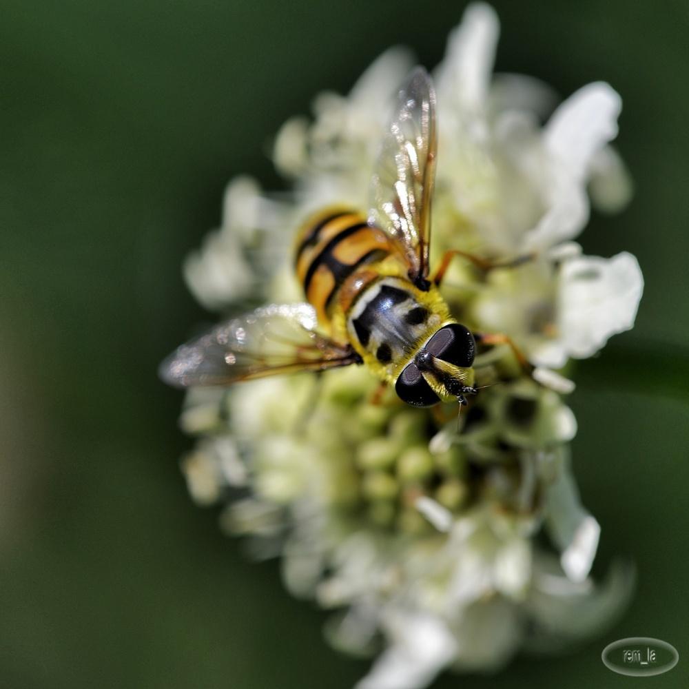 fleur,insecte,vincennes,parc,floral