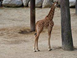 zoo,palmyre,animal