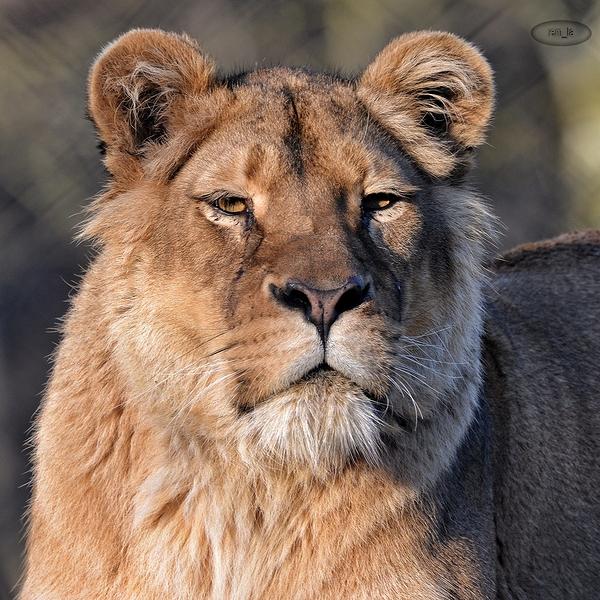 zoo,atilly,animal
