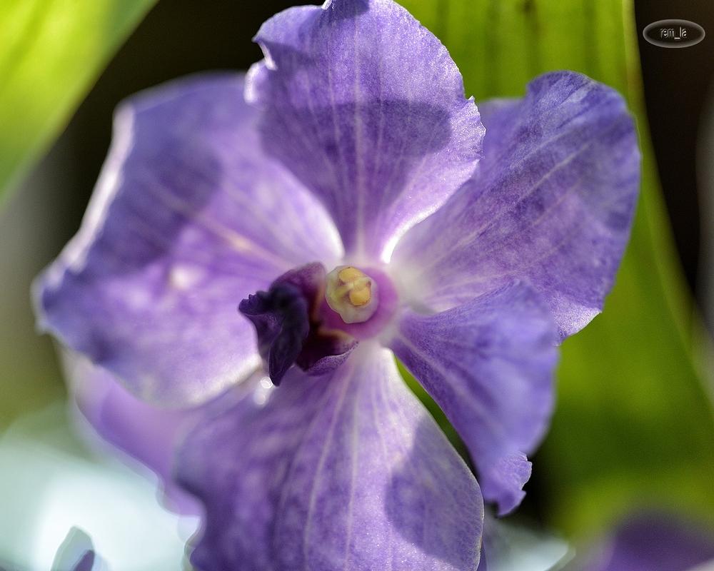 orchidée,fleur,jardin,plante,paris