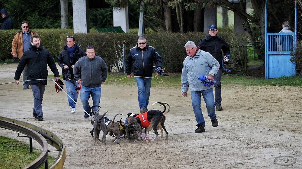 soissons,levrier,course,chien