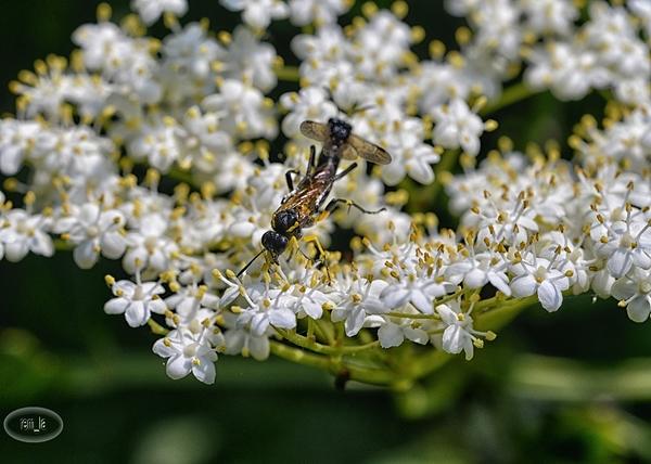 Les insectes du Grand Lavier