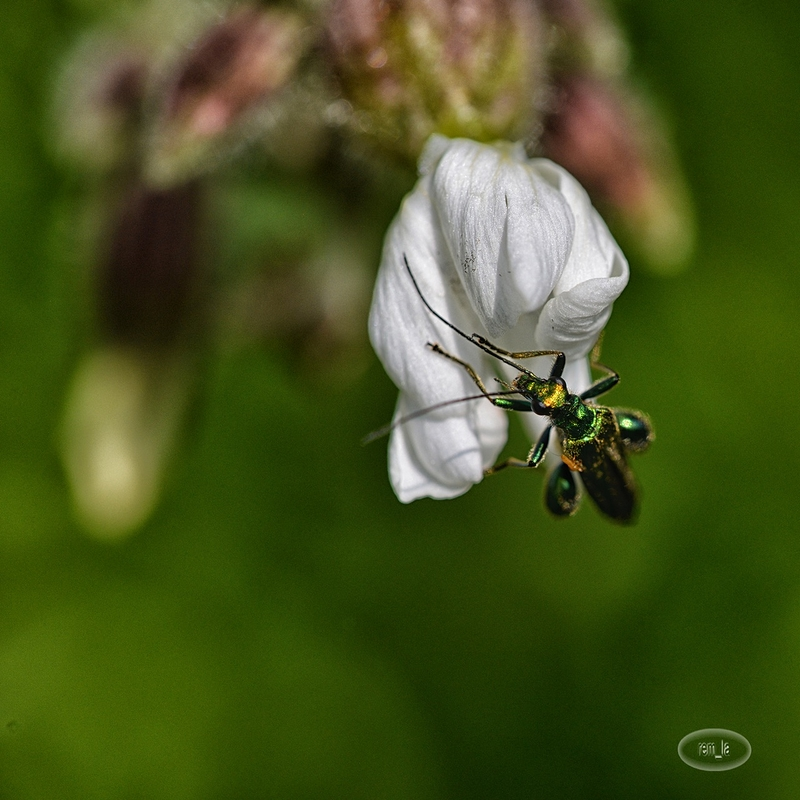 insecte,lavier,somme