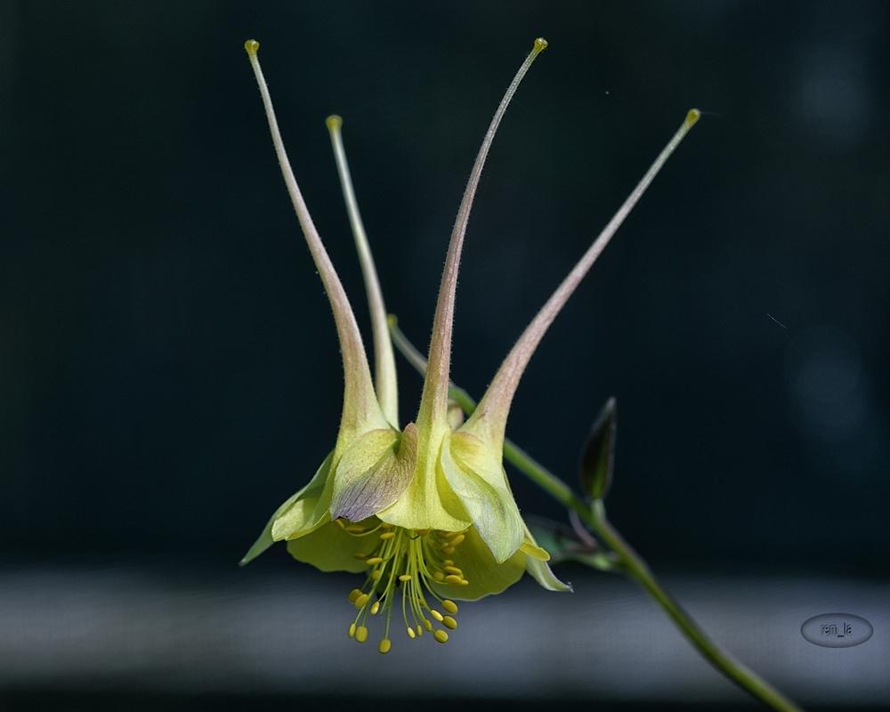 chevreloup,arboretum,fleur,cactus,rocquencourt