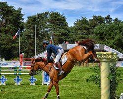 saut,cheval,fontainebleau