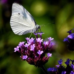 vincennes,parc,floral,insecte