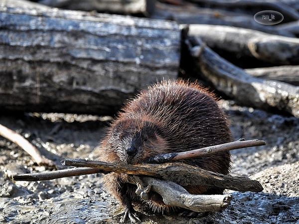 petit tour ou zoo du bois d'Attilly