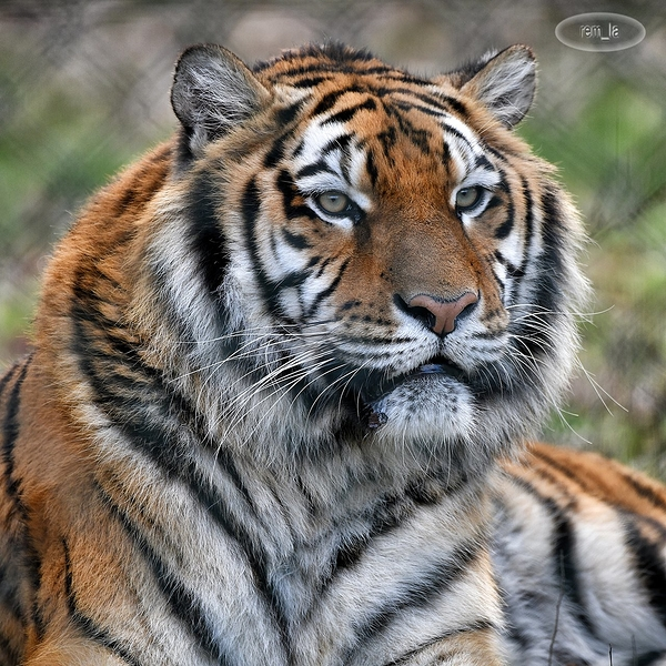 zoo,attilly,animal