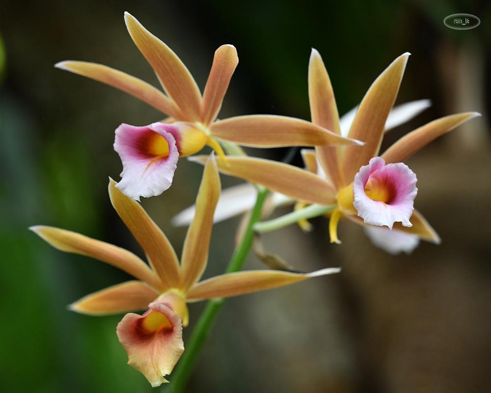 1001 orchidées au jardin des plantes - Plant & Nature Photos ...
