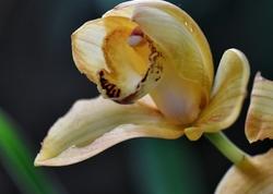 orchidée,jardin,plante,paris,serre