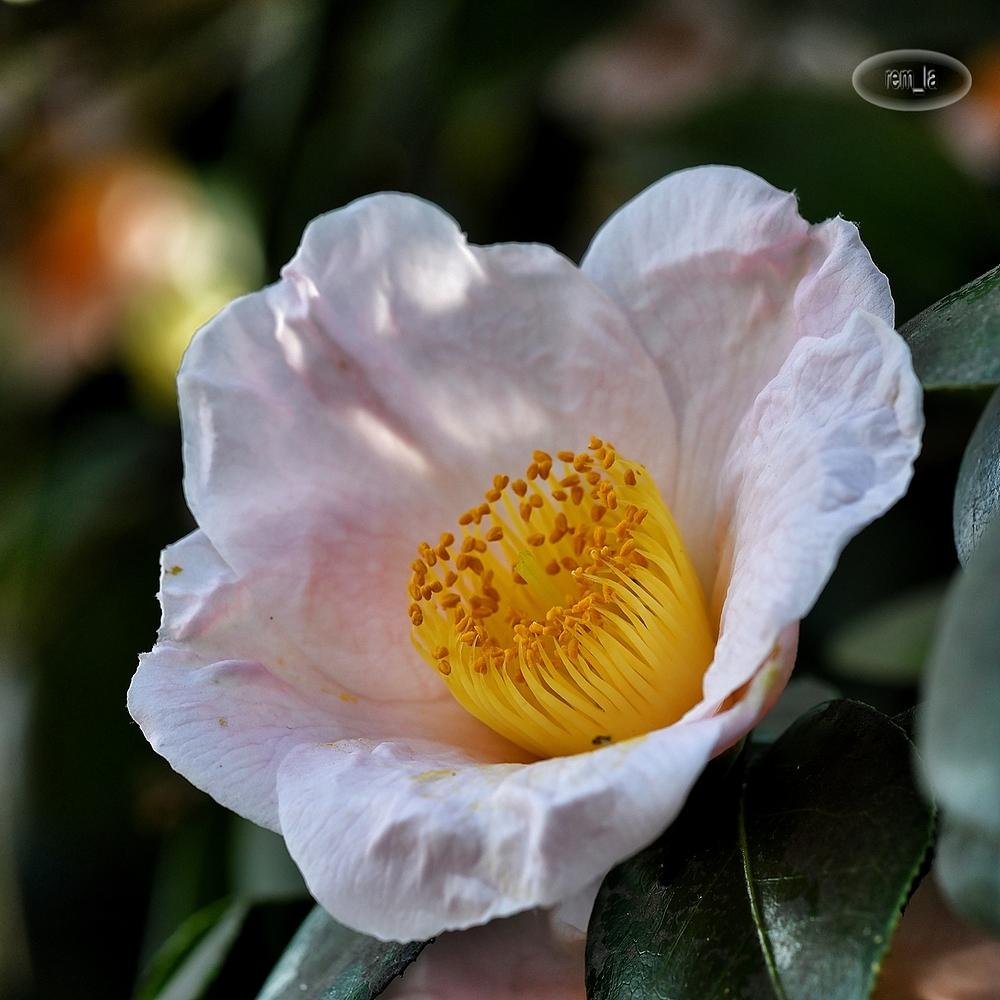 printemps,fleur,vincennes,parc