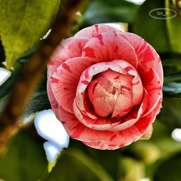 petit tour au parc floral en ce debut de printemps