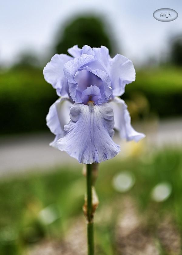 petit tour au parc floral de Vincennes