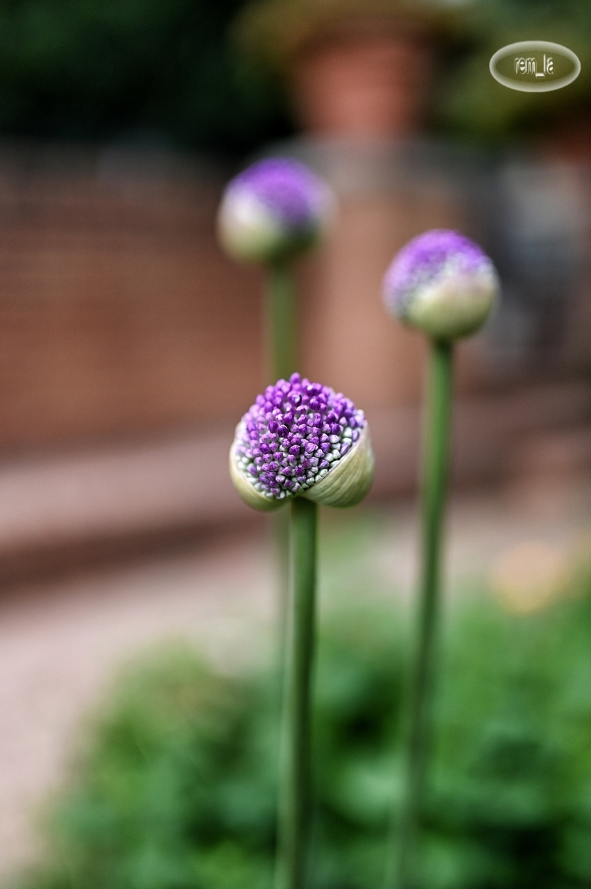 bercy,parc,fleur