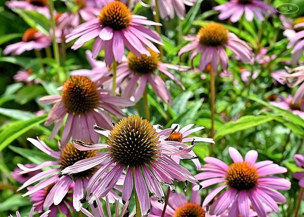 floral,parc,vincennes,fleur