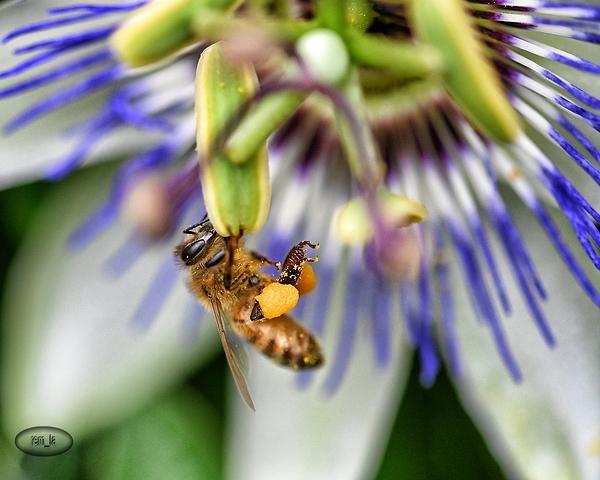 floral,parc,vincennes,fleur,insecte