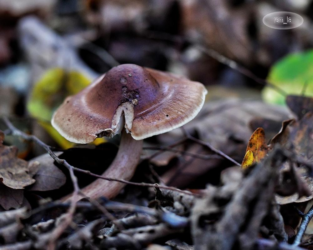 foret,champignon,montceaux