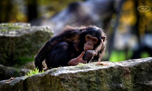 petit tour au zoo du bois d'Attilly