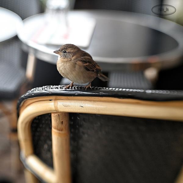 moineau,oiseau