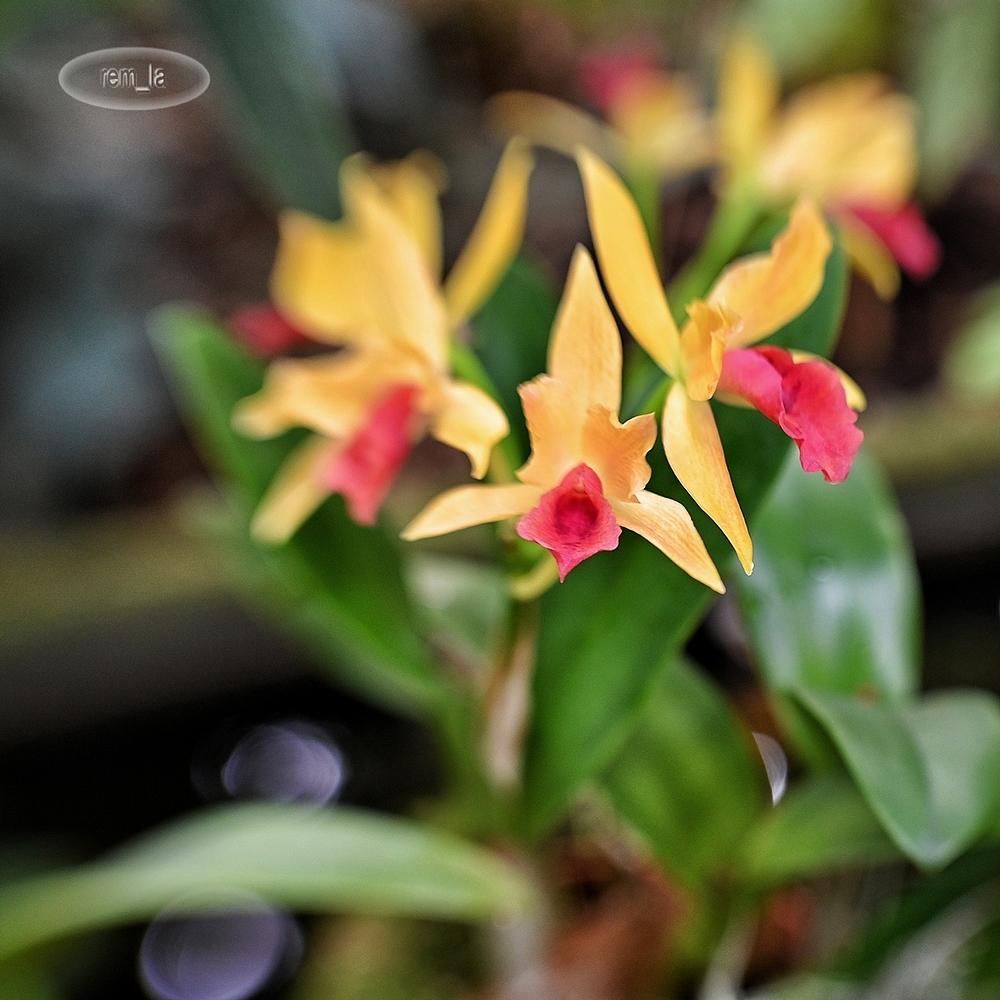 1001,orchidées,fleur,paris