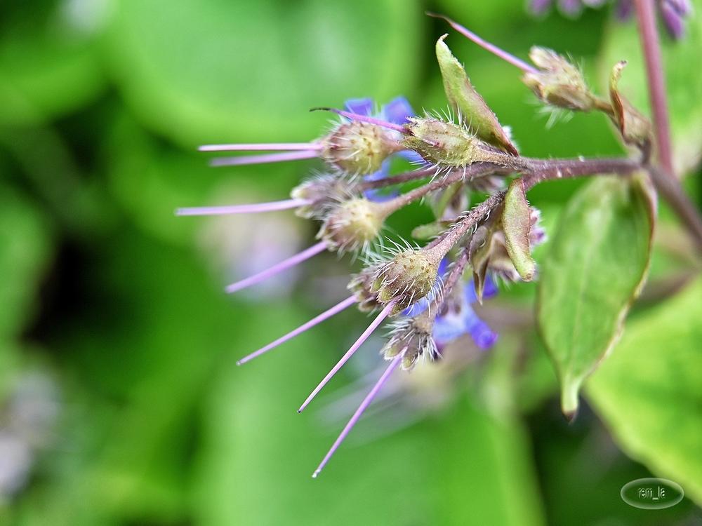 floral parc vincennes