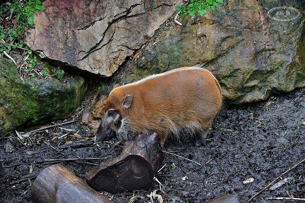 Petit tour au zoo de Beauval