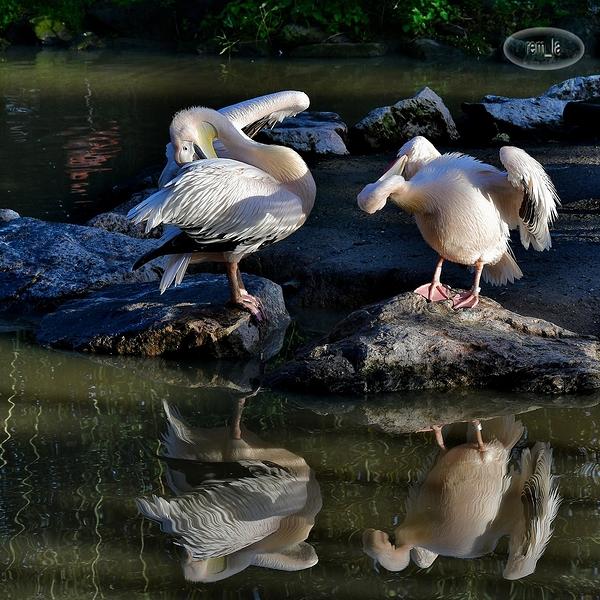 beauval,zoo