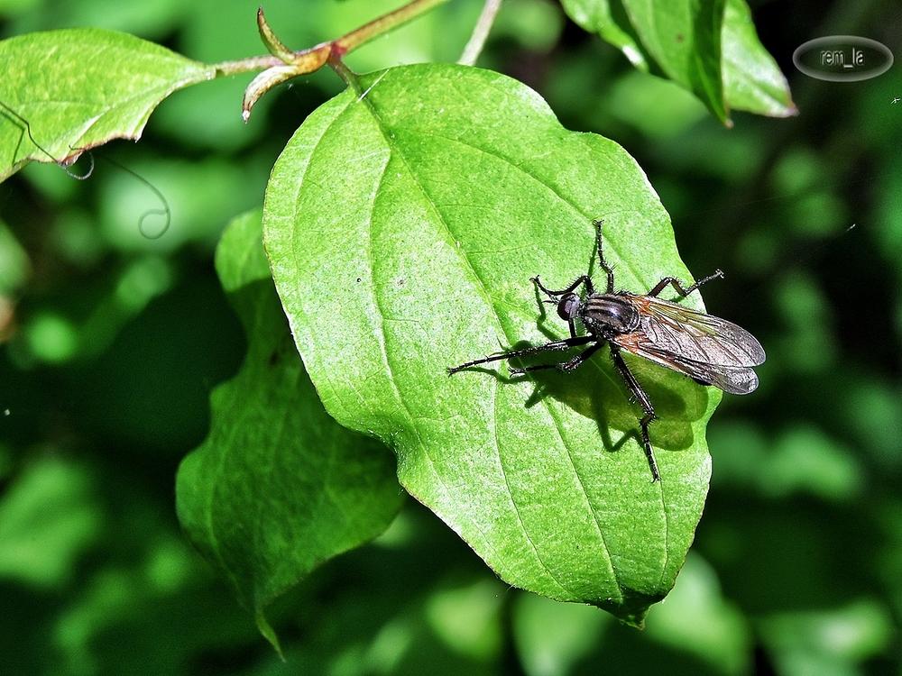 celie,etang,insecte