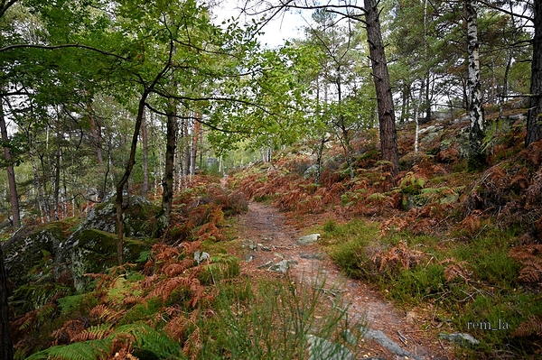 fontainebleau,foret,nature