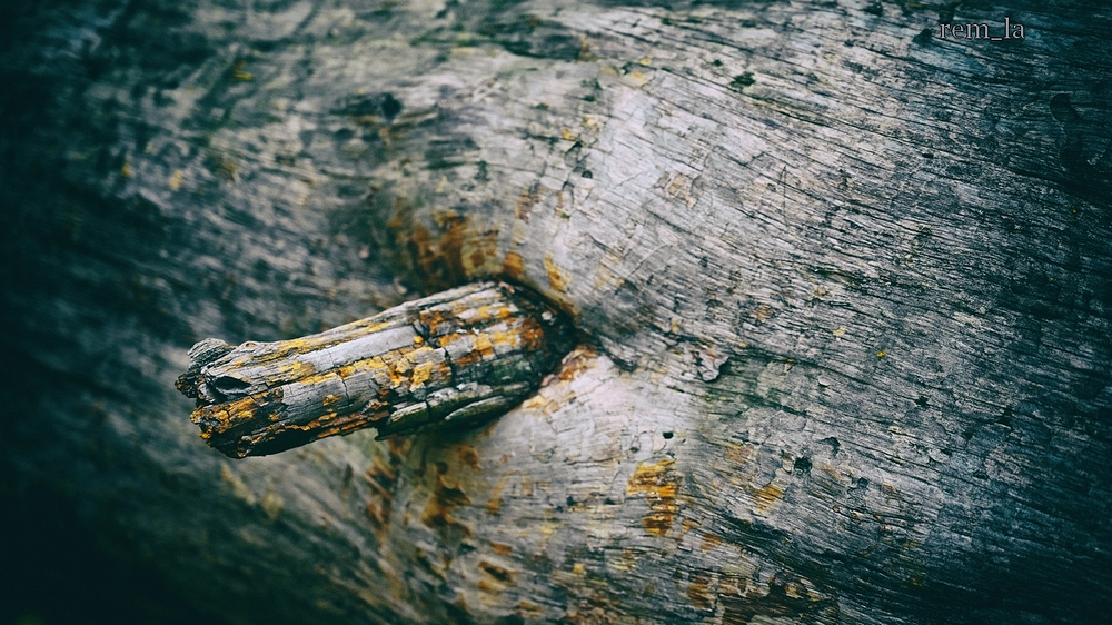 fontainebleau,foret,nature,arbre