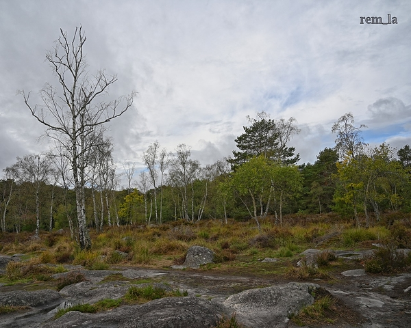 fontainebleau foret nature
