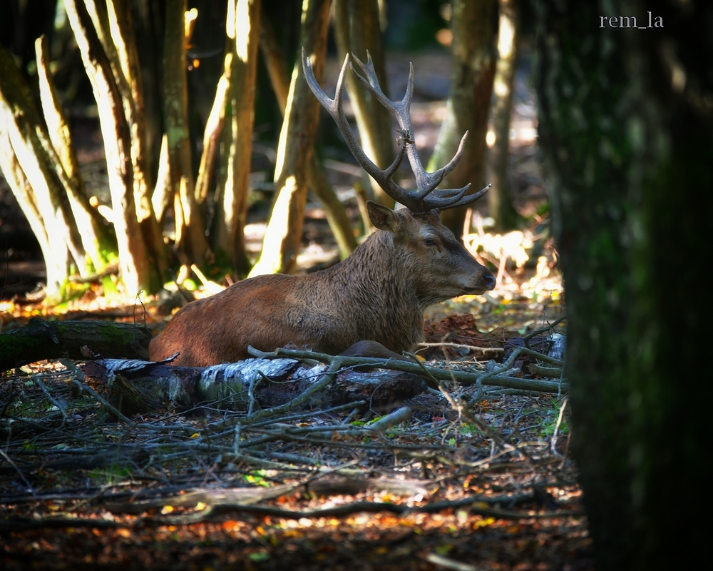 foret,rambouillet,nature