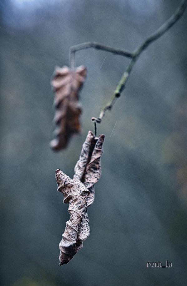 feuille,arbre,hiver