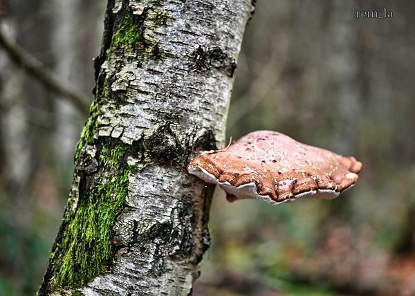 bois,celie,nature,champignon